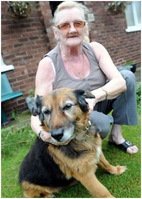 oldest dog in the world